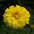 TAGEMIN – QUILIA HAPPY FLOWER